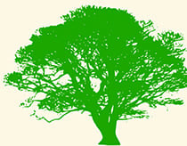 Barnes & Wells Tree Care Limited
