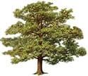P Kernan Tree Surgery