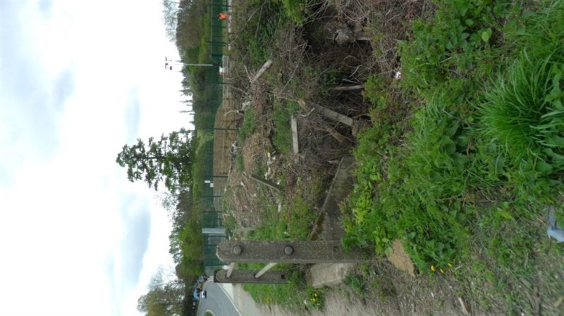 Hedgerow destroyed by HS2