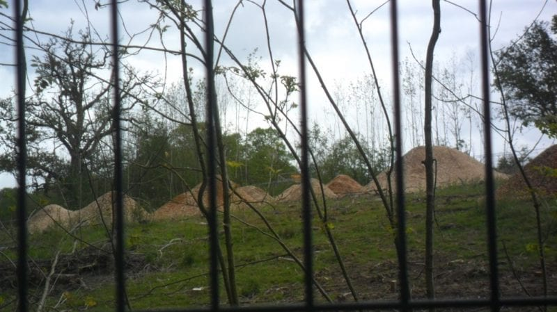 HS2 trees now piles of sawdust. All images courtesy Ann Hayward.