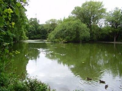 Hampden Pond Wendover Angling Logo