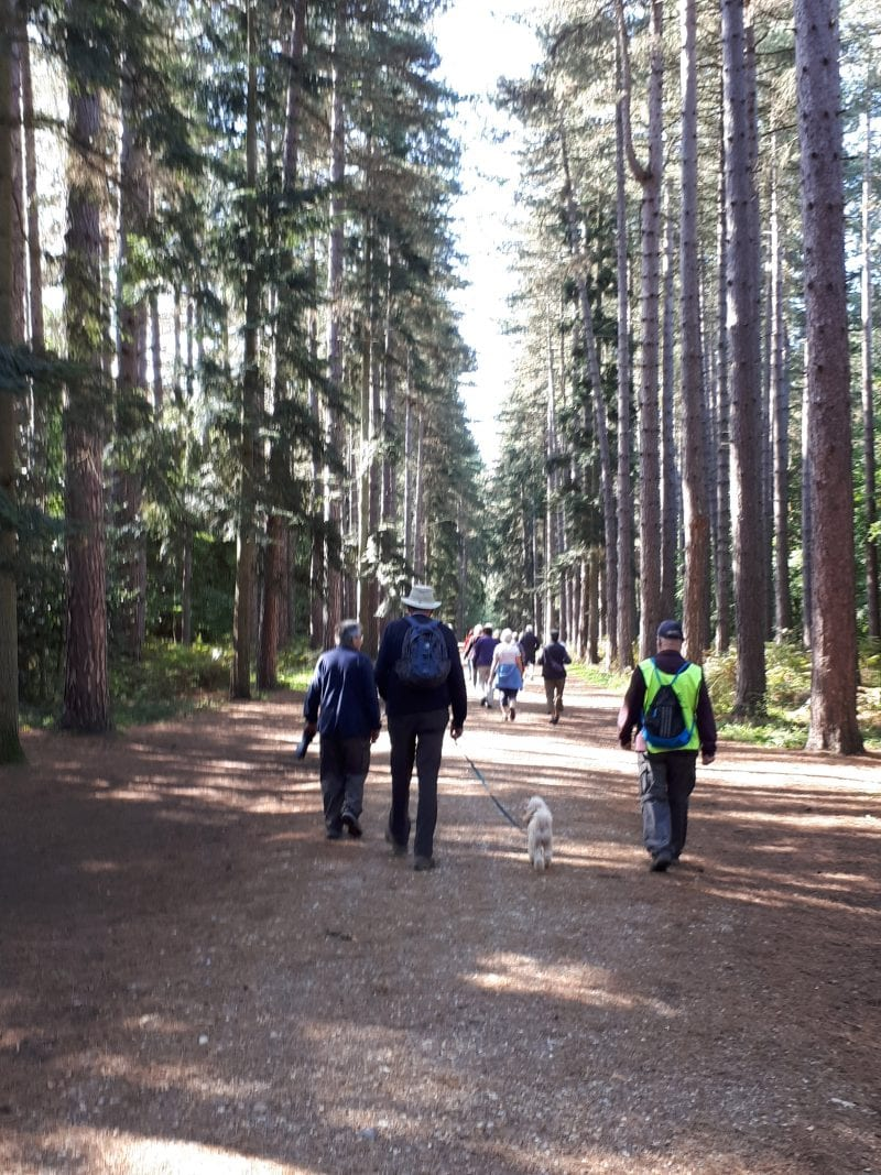 Walk in the woods: Simply Walk visits Black Park, one of Buckinghamshire Council's country parks, near Iver
