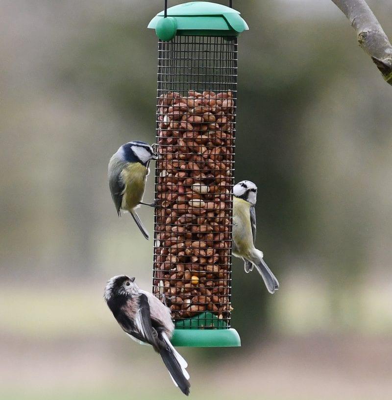 Birds enjoying seed from a feeder
