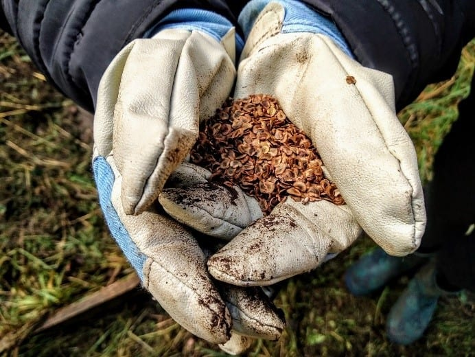 Seed planting. Photo courtesy of Chiltern Rangers.